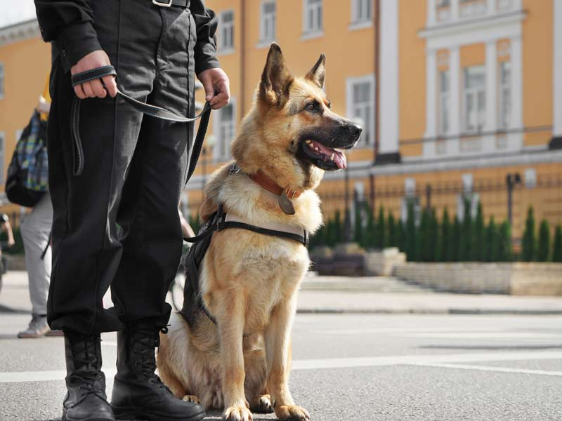 K9 Security Services Birmingham