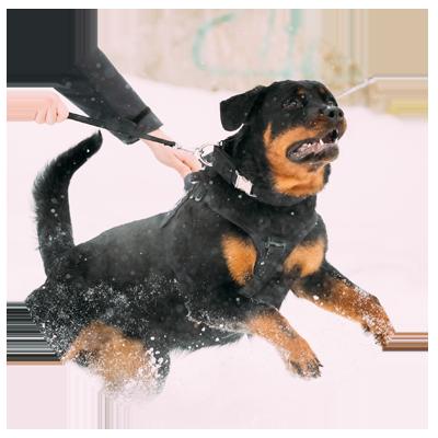 K9 Dog Training